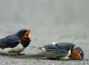 530-true-love-animal-bird