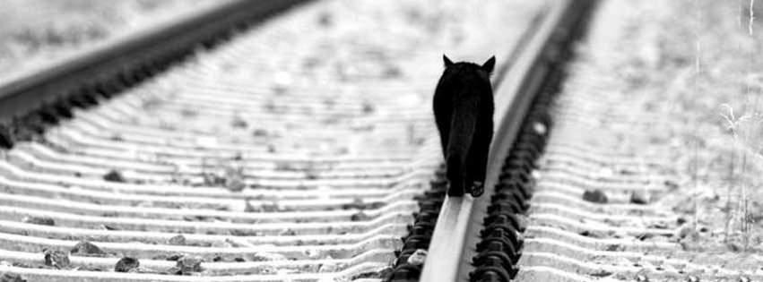 alone black cat facebook cover