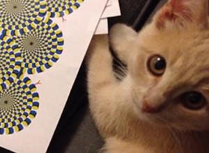 530-kitten-optical-illusion
