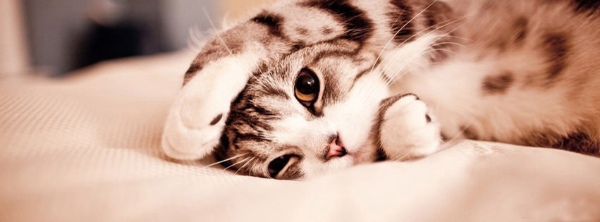cat facebook cover