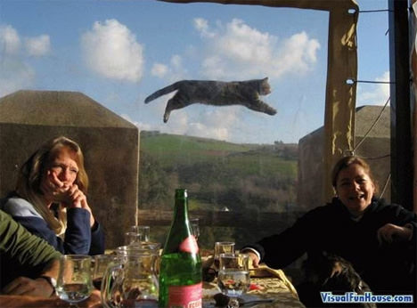 flying cat optical illusion
