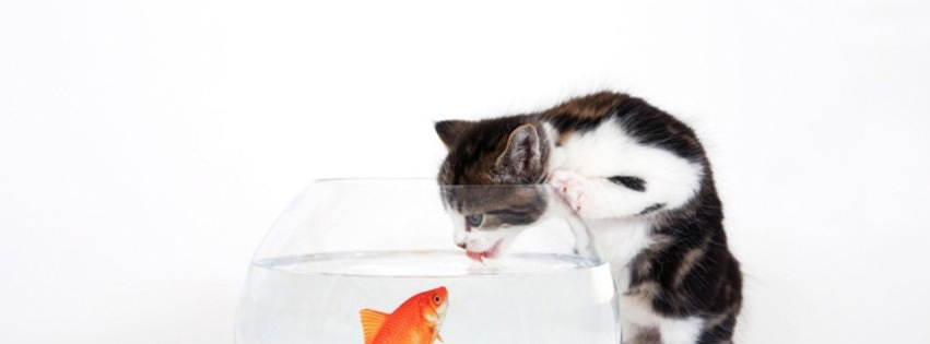 kitten vs fish facebook timeline cover