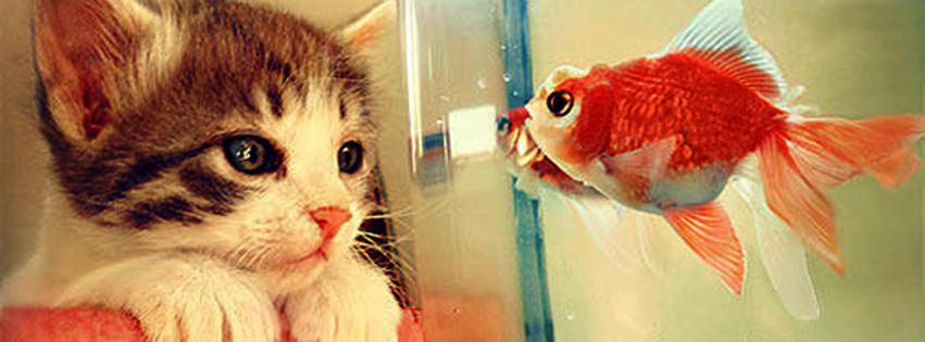 kitten and fish