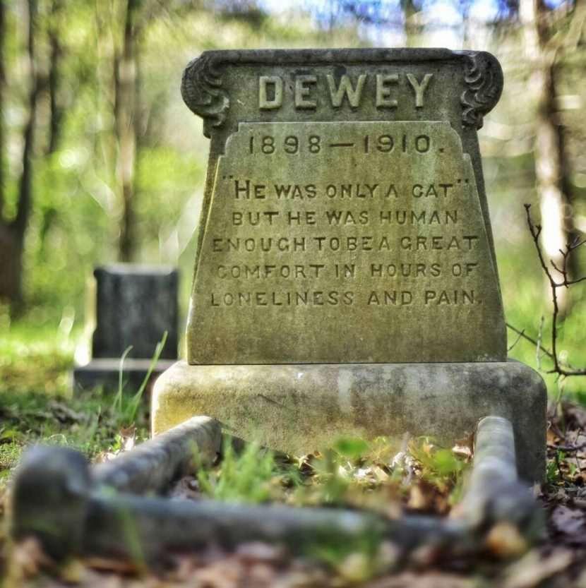 pet cat tomb tombstone quotes