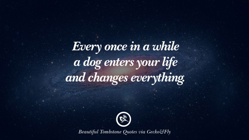 Every once in a while a dog enters your life and changes everything. Beautiful Tombstone Quotes For Your Beloved Cat or Dog