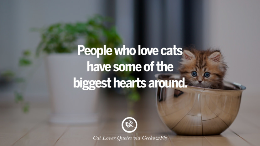 People who love cats have some of the biggest hearts around. Cute Cat Images With Quotes For Crazy Cat Ladies, Gentlemen And Lovers