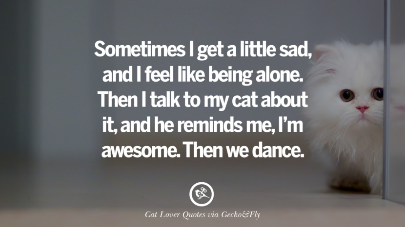 Sometimes I get a little sad, and I feel like being alone. Then I talk to my cat about it, and he reminds me, I'm awesome. Then we dance. Cute Cat Images With Quotes For Crazy Cat Ladies, Gentlemen And Lovers
