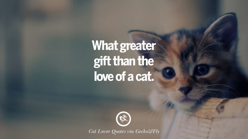 What greater gift than the love of a cat. Cute Cat Images With Quotes For Crazy Cat Ladies, Gentlemen And Lovers