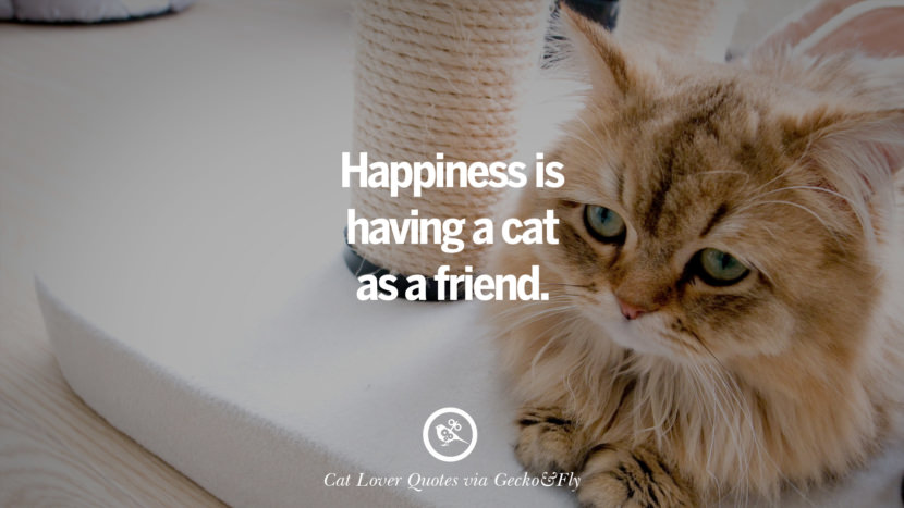 happiness is having a cat as a friend. Cute Cat Images With Quotes For Crazy Cat Ladies, Gentlemen And Lovers