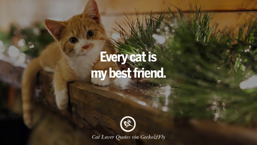 Every cat is my best friend. Cute Cat Images With Quotes For Crazy Cat Ladies, Gentlemen And Lovers